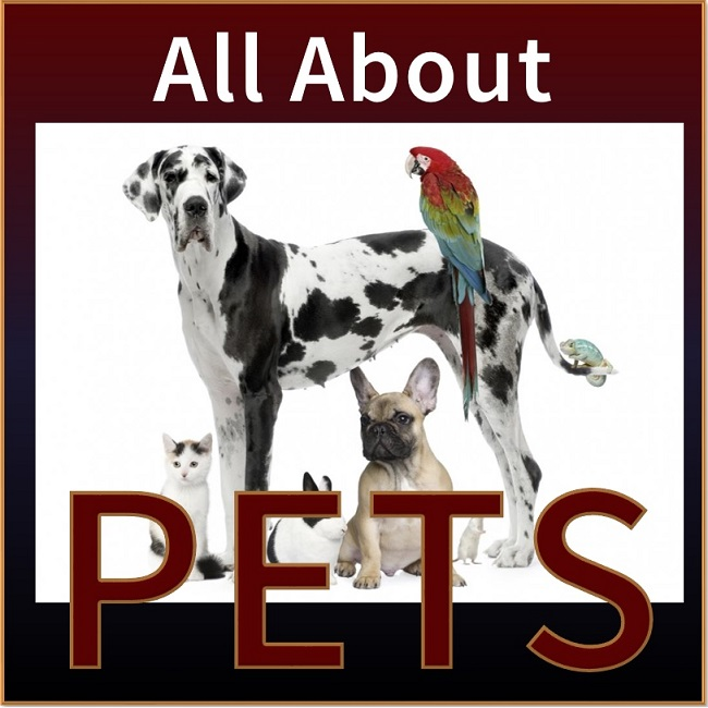 <center><h4>Managing Pet Risks</h4></center>