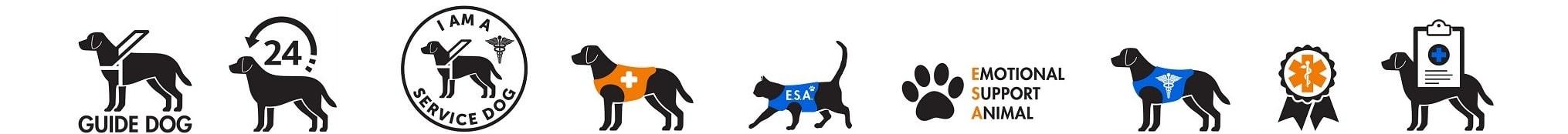Service Animals Emotional Comfort Pets Training Property Managers Robert Locke