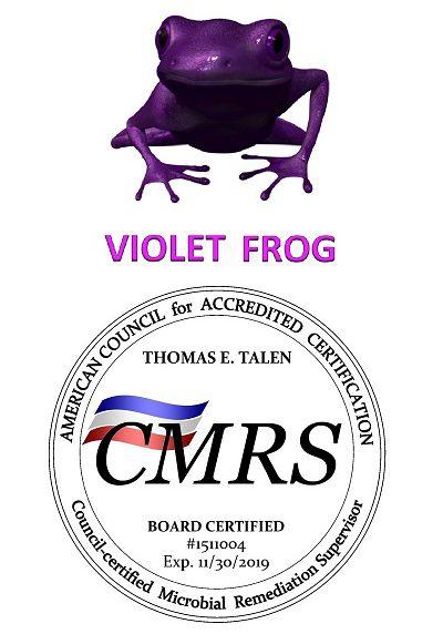 Violet Frog Mold Remediation Atlanta 400 600